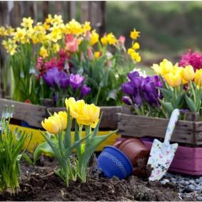 Высадка луковичных цветов на садовую клумбу