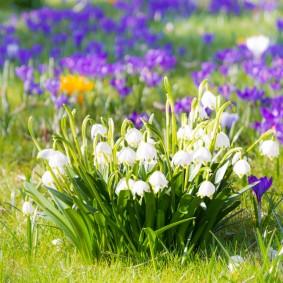 Невысокий кустик с белыми цветками