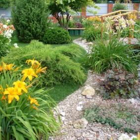 Желтые цветы на каменистой клумбе