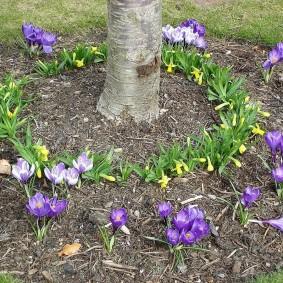 Весенние цветы вокруг ствола дерева