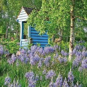 Цветение летних цветов в саду природного стиля