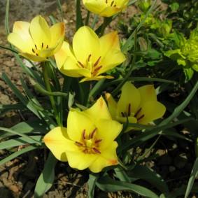 Ярко-желтые лепестки на цветке крупного размера