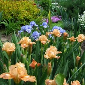 Нежное цветение многолетних луковичных растений