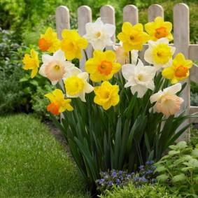 Симпатичные цветки около деревянного заборчика