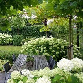 Садовый стол в окружении древовидных гортензий