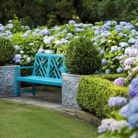 Голубая скамейки между цветущими кустиками