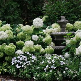 Белые цвета в ландшафте сада