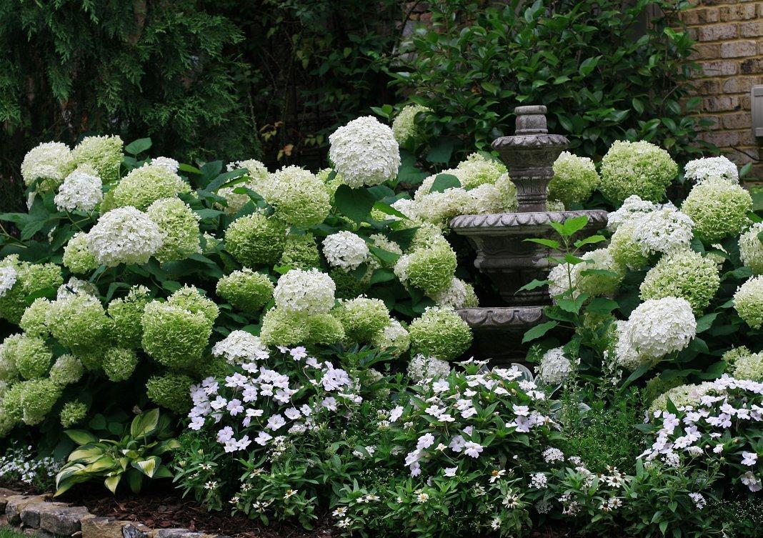 скамейки без гортензиевый сад фото санкции