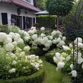 небольшой сад с красивыми растениями