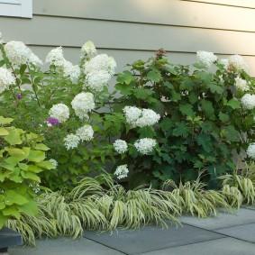 Листопадные кустарники вдоль стены частного дома