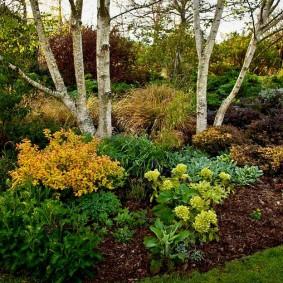 Цветущие кустарники под высокими деревьями