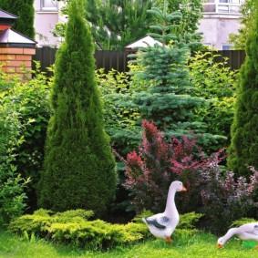 Декоративные гуси перед колоновидными туями