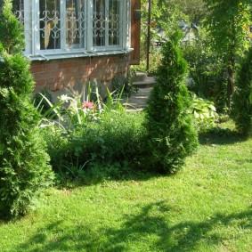 Зеленый газон под молодыми туями