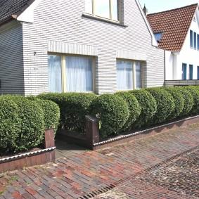 Живая изгородь из шаровидных туй перед частным домом