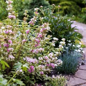 Прямостоячие ветки кустарника с мелкими цветками