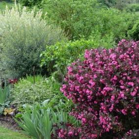 Садовый миксбордер из многолетних культур