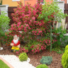 Садовый гномик на клумбе с гибридной вейгелой