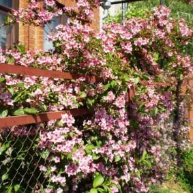Декор цветущим кустарником забора из сетки