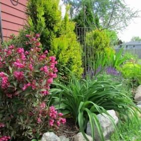 Длинные листья лилейника на садовой клумбе