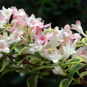 Ветка кустарника с красивыми цветками