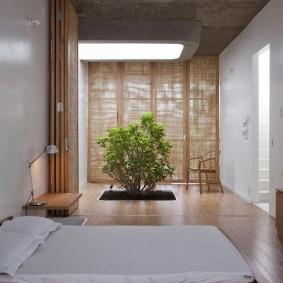 Живой кустарник в спальной комнате