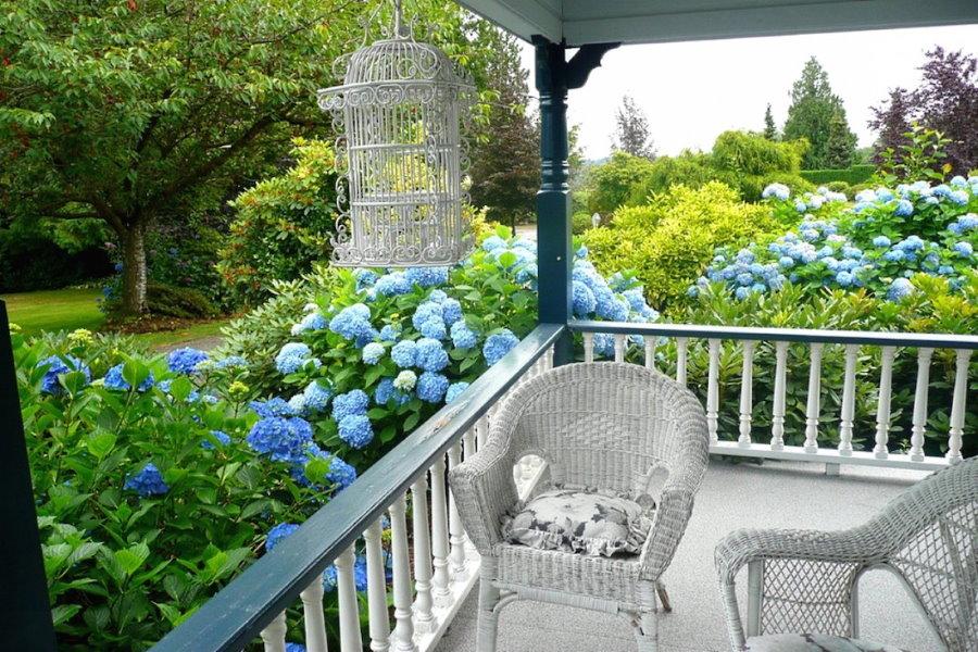 Голубые гортензии у террасы из дерева