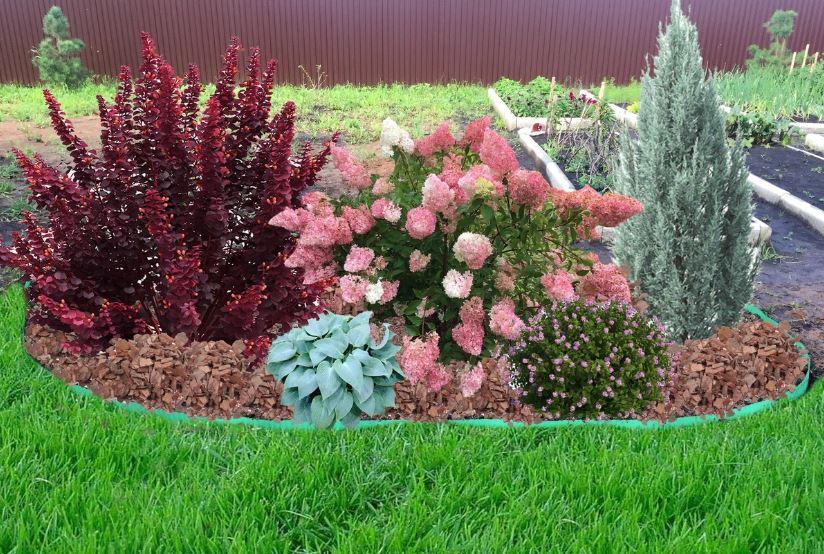 Гортензия в ландшафтном дизайне с другими растениями