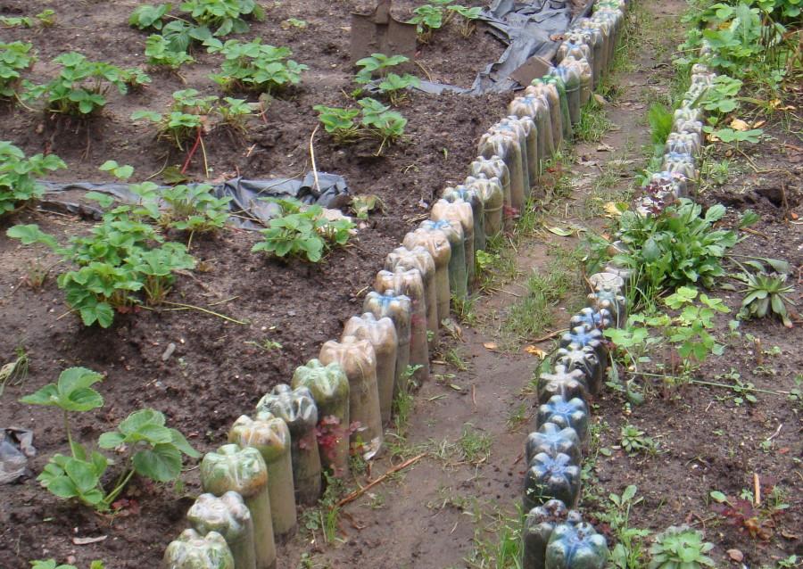 Садовая земляника на грядке из пластиковых бутылок