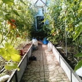 Кусты томатов на грядках из плоского шифера