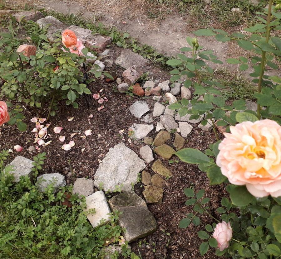 Мелкие камушки на клумбе с розами