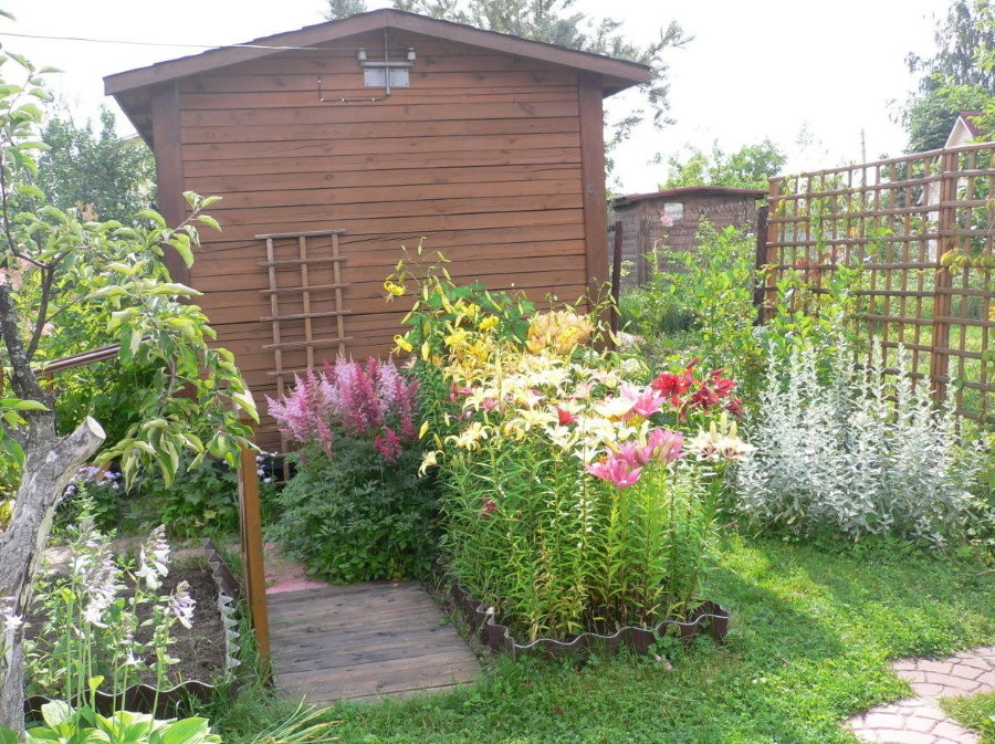 Грядка с лилиями около деревянного сарая