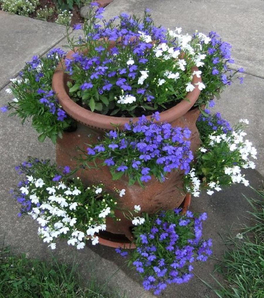 Вертикальная клумба из лобелии с белыми и сиреневыми цветками