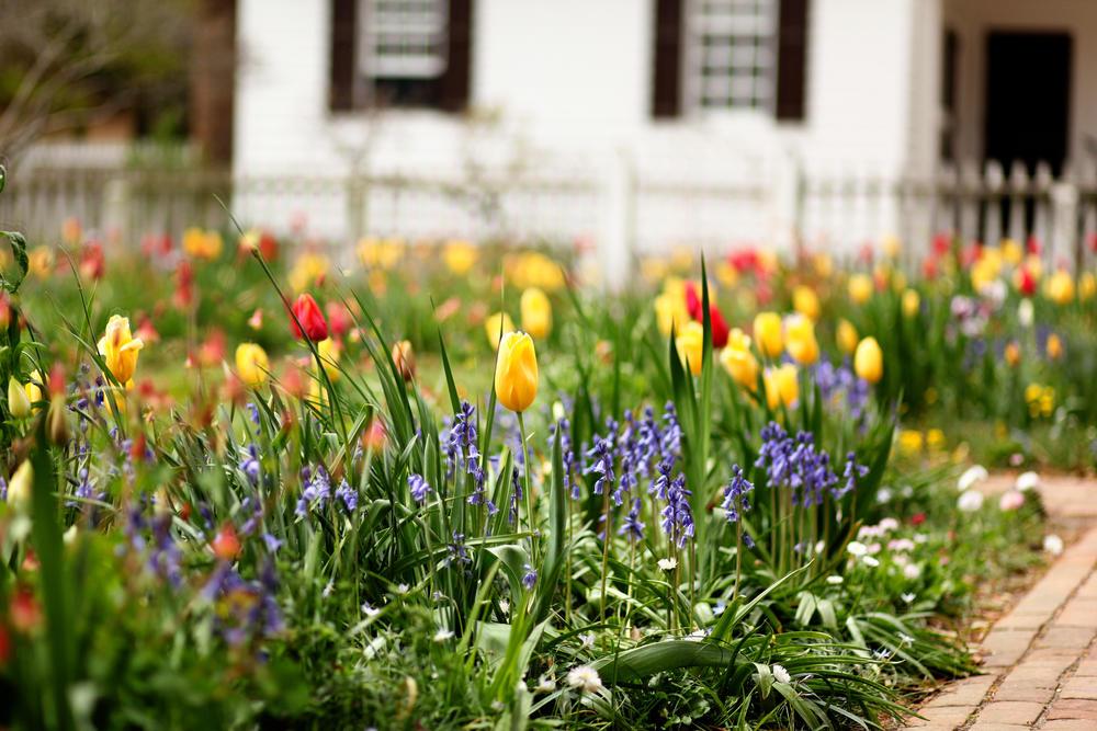 Луковичный цветник на садовом газоне