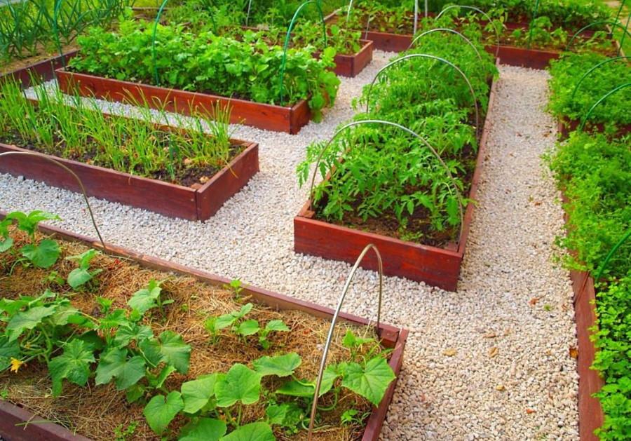 Гравийная засыпка на огороде с пластиковыми грядками