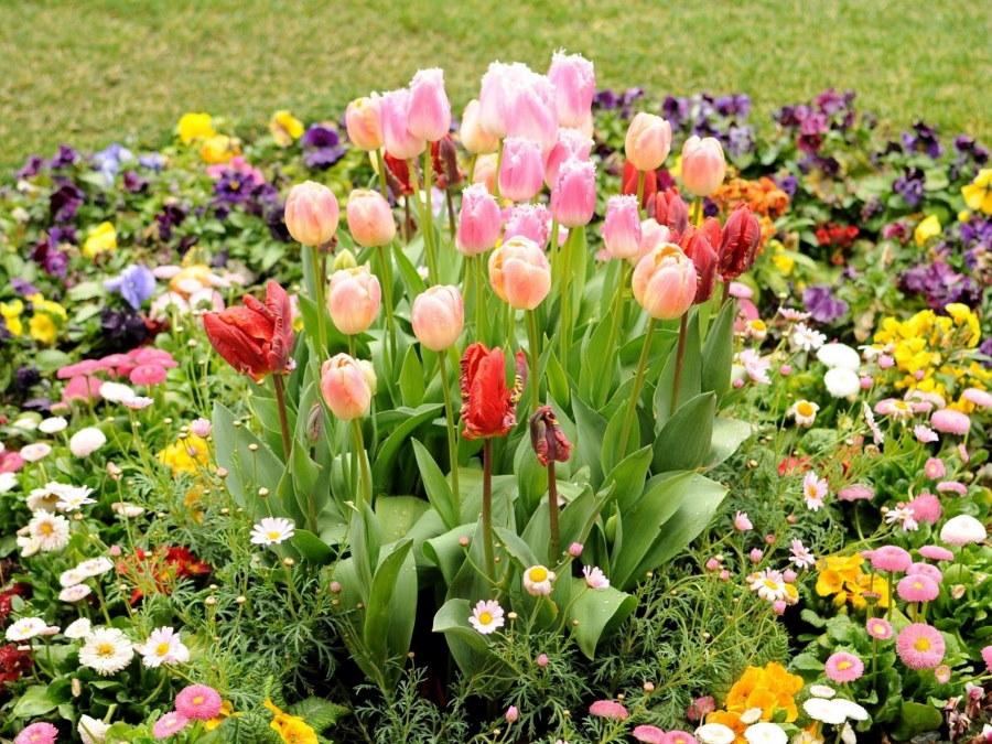 Клумба с цветущими тюльпанами посередине