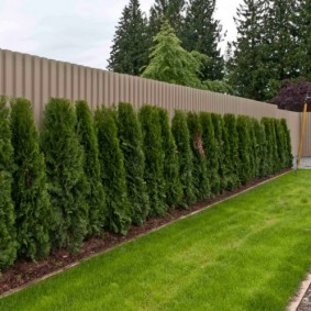 забор с растениями