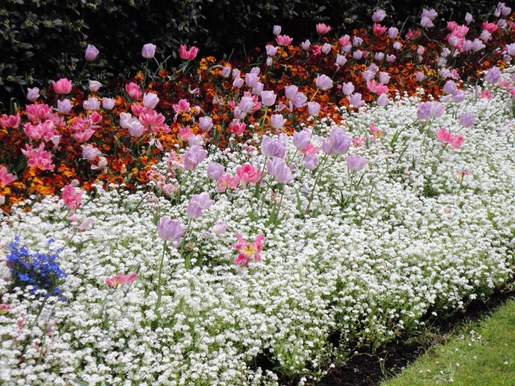 Садовая рабатка с тюльпанами и другими многолетними цветами