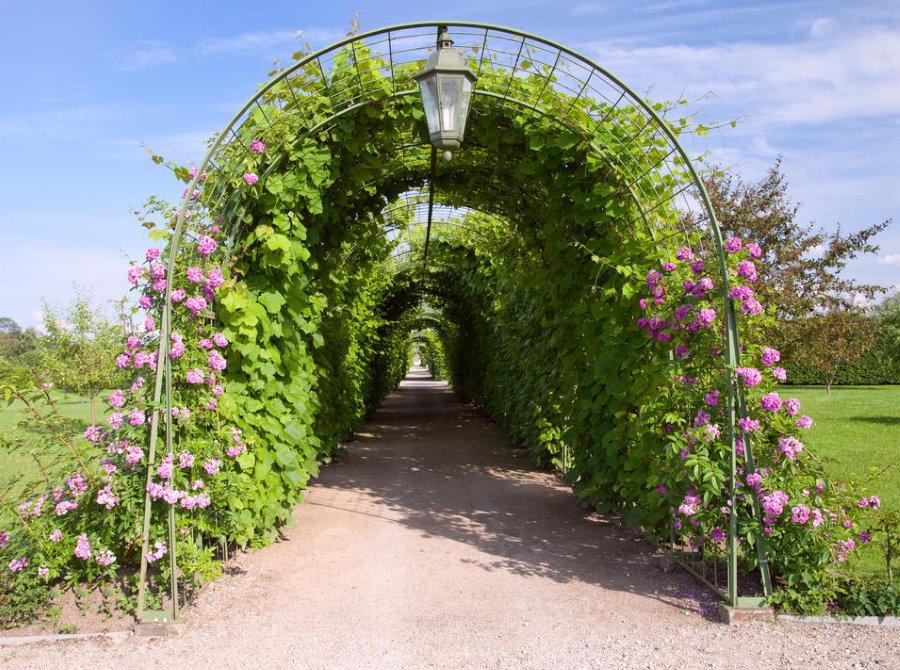 Садовая аллея из металлических арок