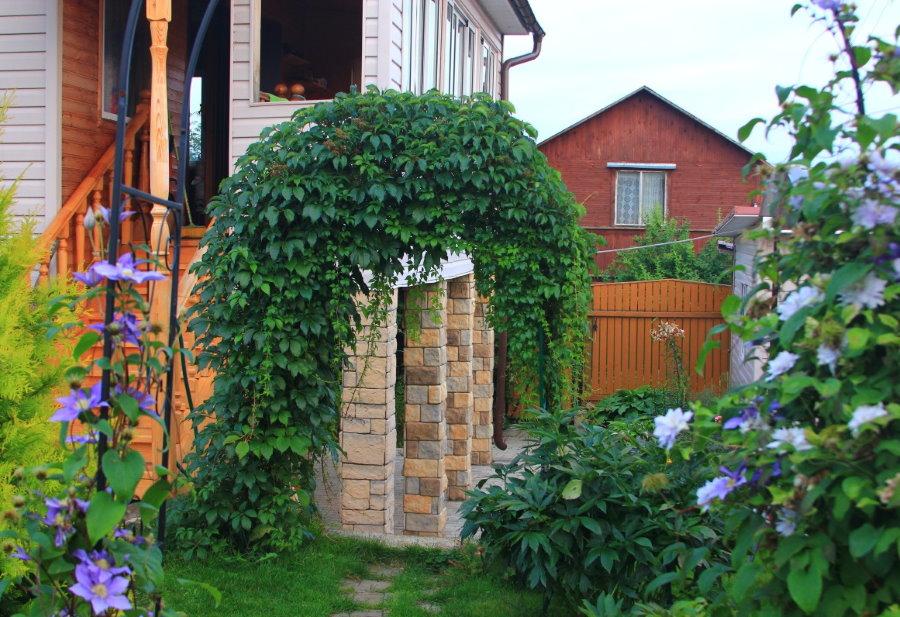 Садовая арка с девичьим виноградом