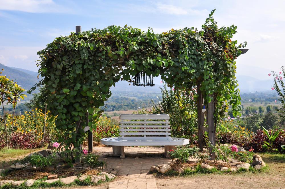 Деревянная арка с вьюнами над скамейкой для отдыха