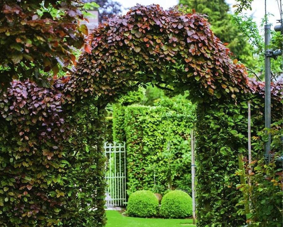 Арка в саду с живой изгородью из лиственных многолетников