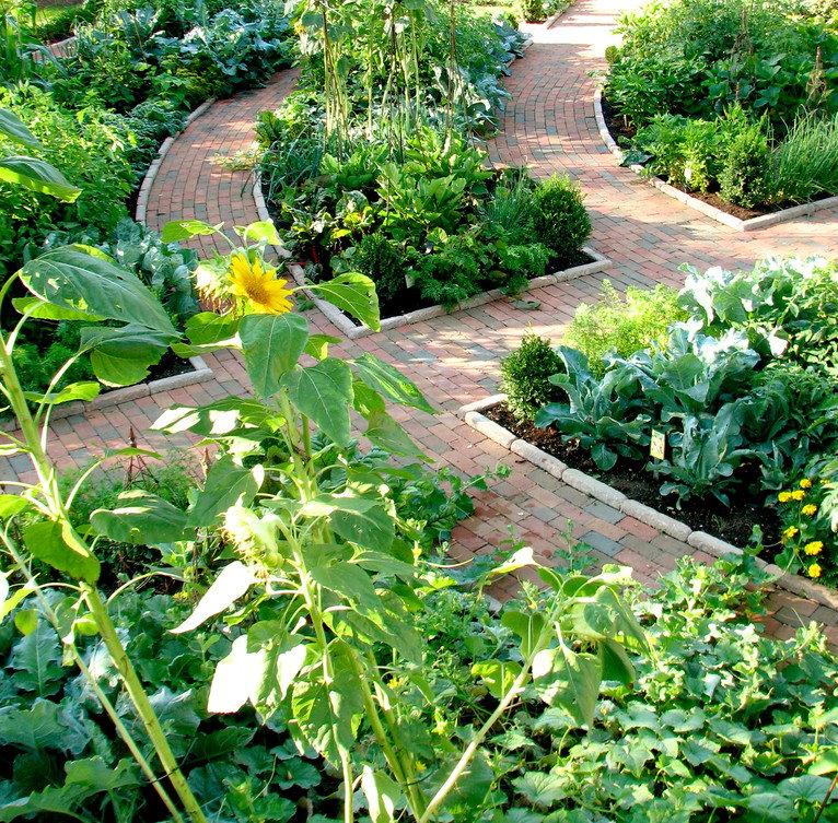 Красивый огород с аккуратными грядками и без грязи