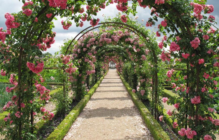 Цветочная аллея из стальных арок с розами