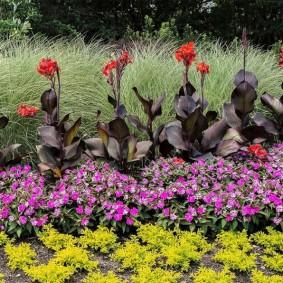 цветок канна в саду фото оформление
