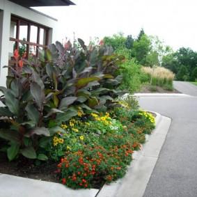 цветок канна в саду виды декора