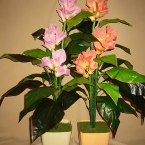 цветок канна в саду варианты дизайна