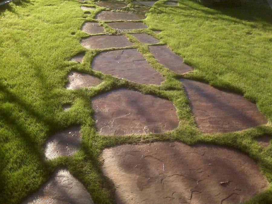 Каменная тропинка через дачный газон