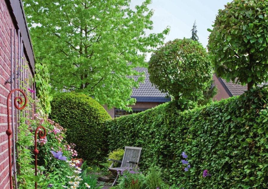 Оригинальная формировка живой изгороди из лиственных кустарников