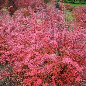 Длинные ветки на кустарнике с осенними листьями