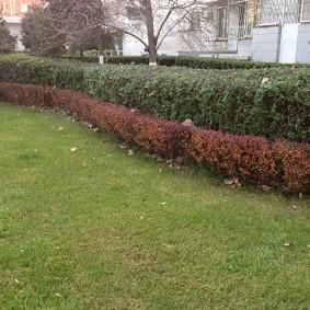 Двухрядная изгородь из лиственных кустарников